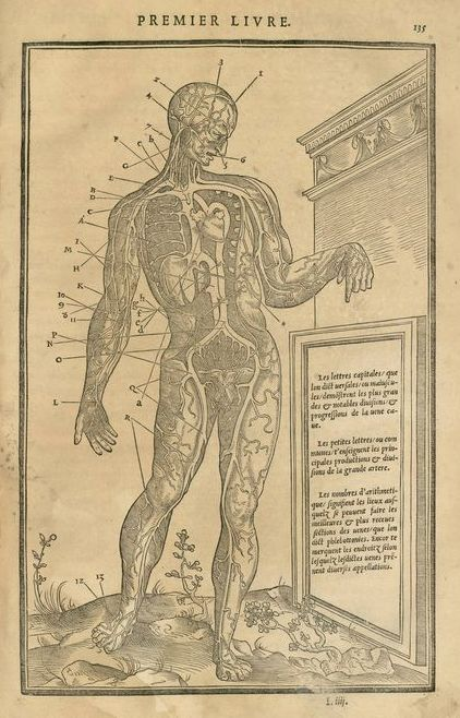 Planche tirée de : Charles Estienne, La Dissection des parties du corps humain, Paris, Simon de Colines, 1546 (source : http://bibulyon.hypotheses.org/27).